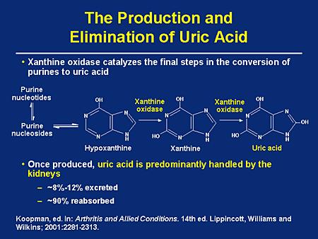 purines to uric acid